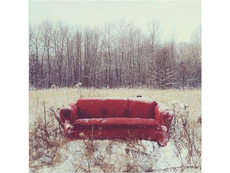 Sehen Sie Border Collie Hund Momo auf dem Bild? Oder nur das Sofa?