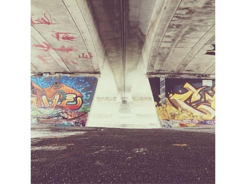 Border Collie Hund Momo unter der Brücke: Schwer zu finden, aber wirklich da