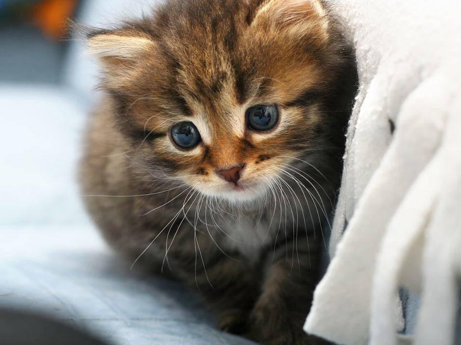 Getigerte-Katze-Baby-Bett