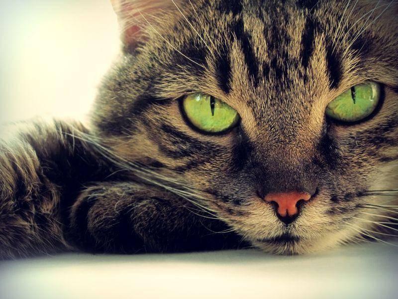 Getigerte-Katze-Gruene-