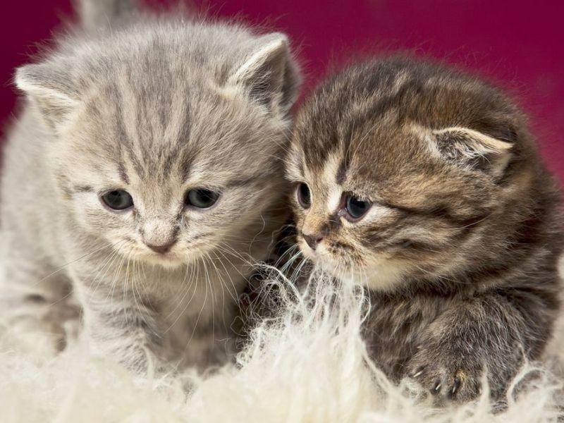 Getigerte-Katzen-Babys