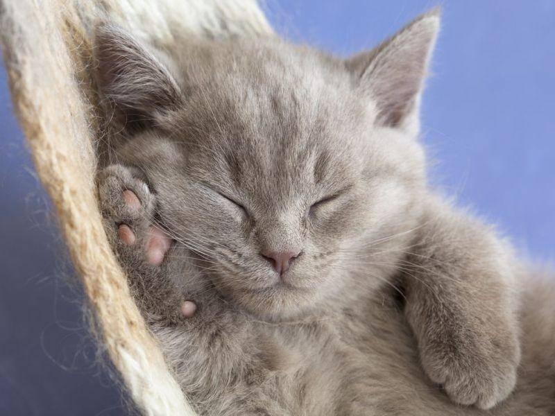 Bildergalerie - Katzen sind einfach immer hundemüde - Foto: Shutterstock / Liliya Kulianionak