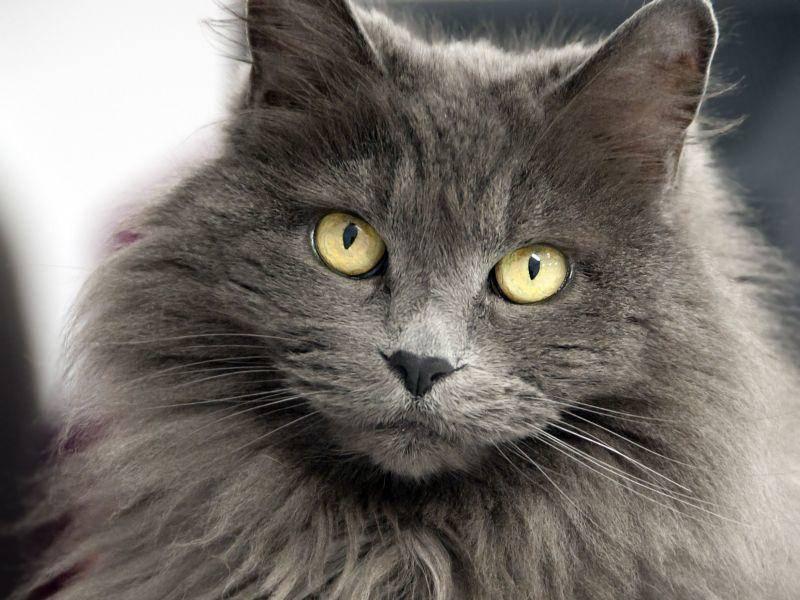 Bildergalerie - Katzenaugen: Hypnotisierende Blicke - Foto: Shutterstock / aspen rock