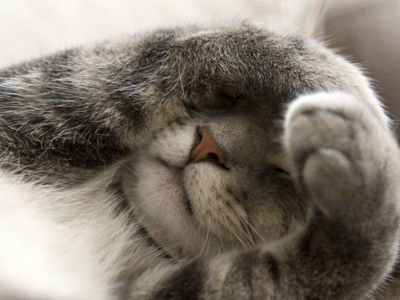 Graue-Katze-Schlafen