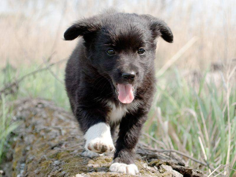 Ein Labrador Hund sucht Abenteuer