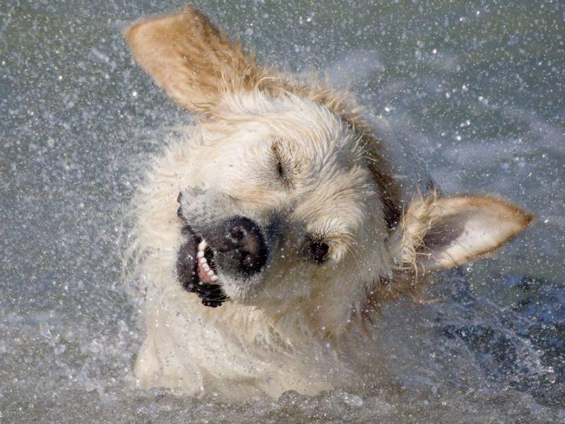 Mischlingshund schüttelt sich im Wasser