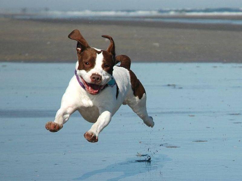 Ein Mischlingshund macht Tempo