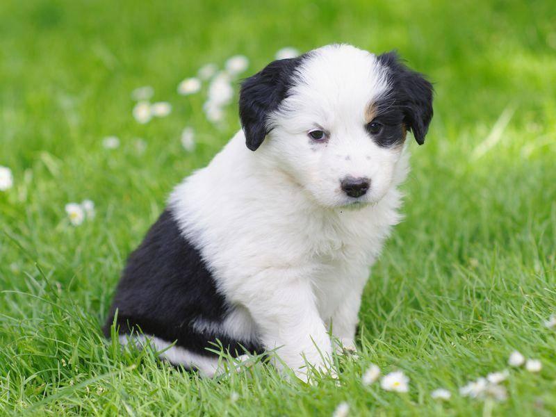 Kleiner Mischlingshund zum verlieben