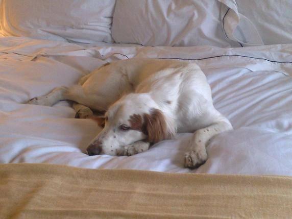 Hundemüde? Dann ab zu Herrchen ins Bett