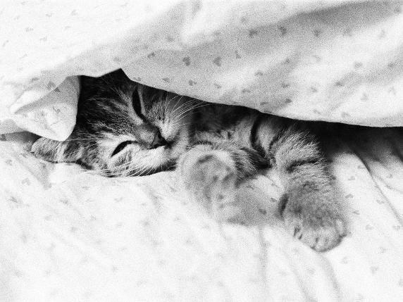 Single frauen katzen
