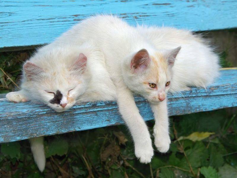 Weiße Katzen ruhen sich auf einer Bank aus