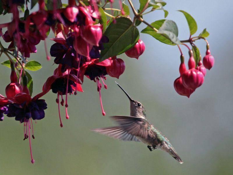 Klein und fein: Kolibri