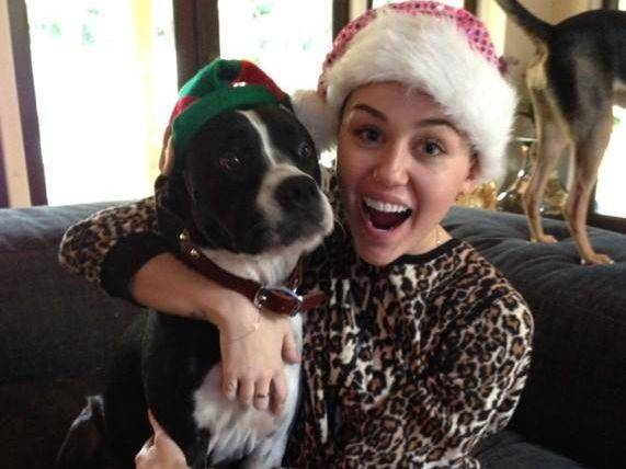 Miley-Cyrus-Hund