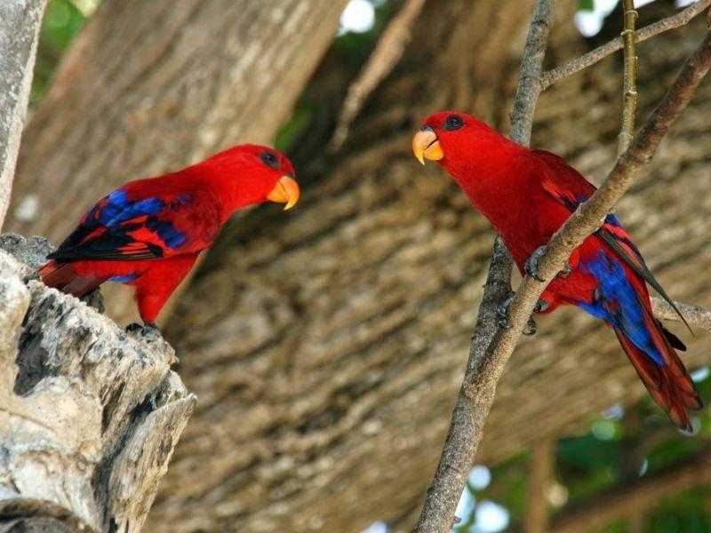 Welcher ist schöner? Tierisch bunte Papageien Vögel