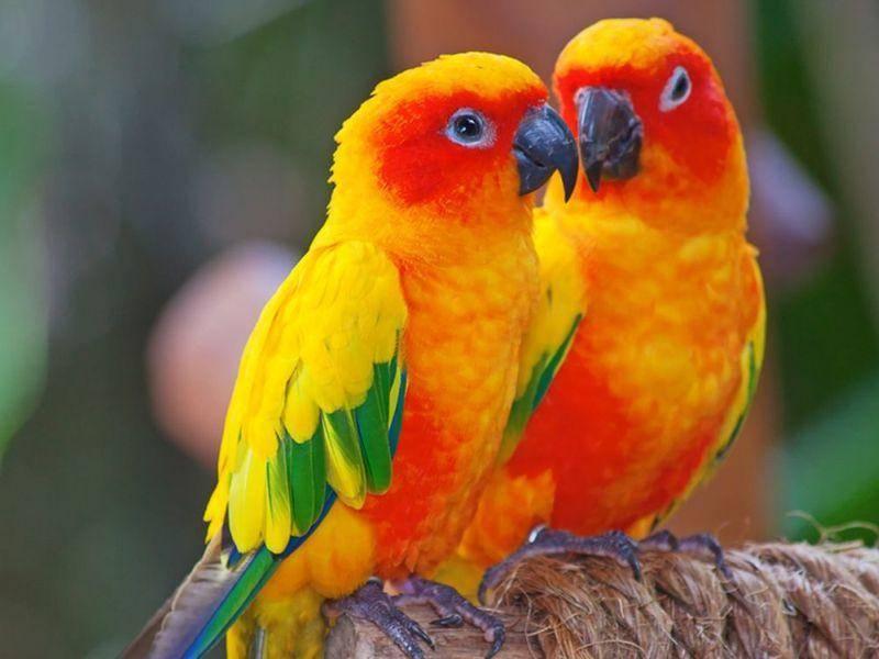 Niedlich und farbenfroh: Papageien Pärchen