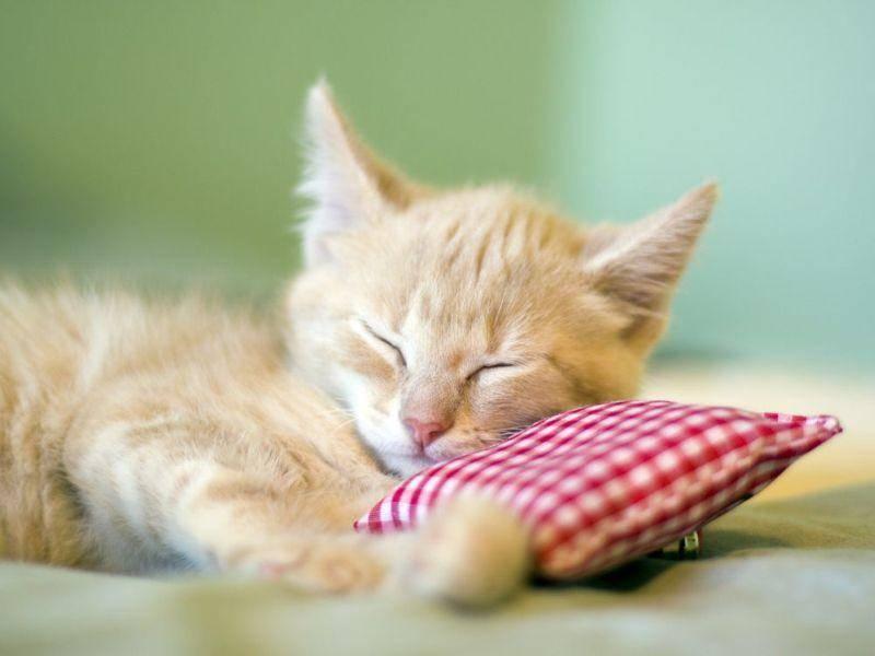 Rote-Katze-Baby-Kissen-Schlafen