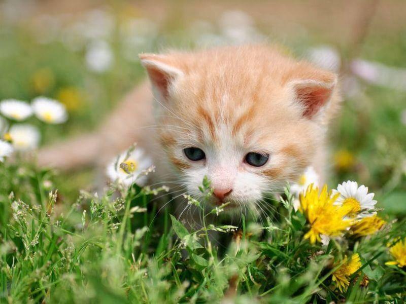 Rote-Katze-Baby-Wiese