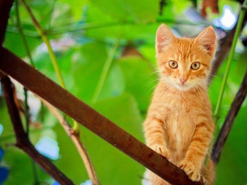 Rote-Katze-Baum-Gruen