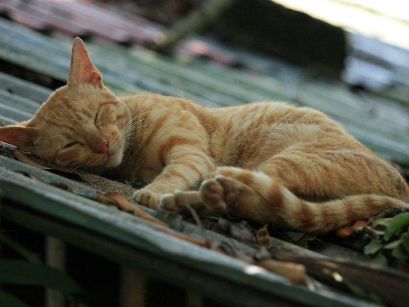 Rote-Katze-Dach-Schlafen