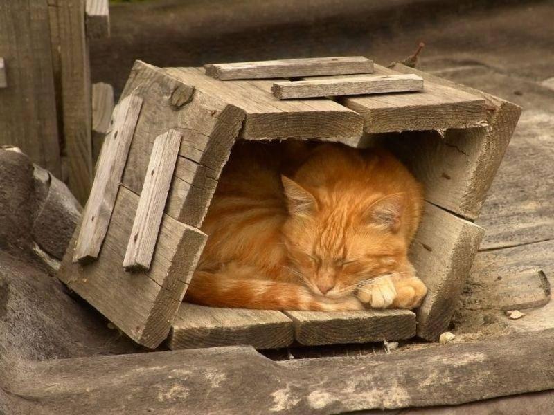 Rote-Katze-Holz-Schlafen