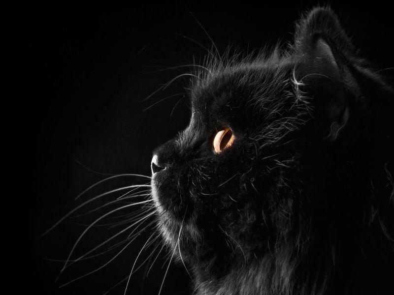 Schwarze-Katze-Orange-Augen-Seite
