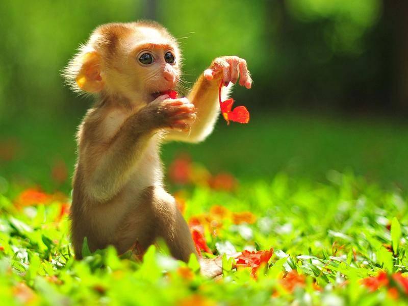 Will nicht klettern: Babyaffe hat seinen Lieblingsplatz auf der grünen Wiese