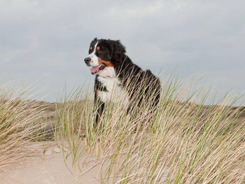 Tolles Valentinstagsgeschenk für den Hund: Ein Spaziergang am Meer