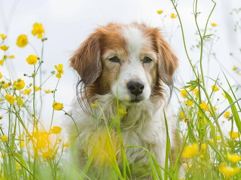Frühling mit dem Hund genossen? Dann kann ja jetzt der Sommer kommen ; ) — Bild: Shutterstock / Burry van den Brink