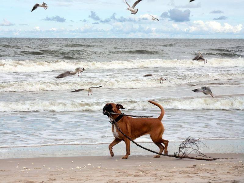 Wo holt der Hund sein Stöckchen am liebsten? Beim Strandurlaub natürlich!
