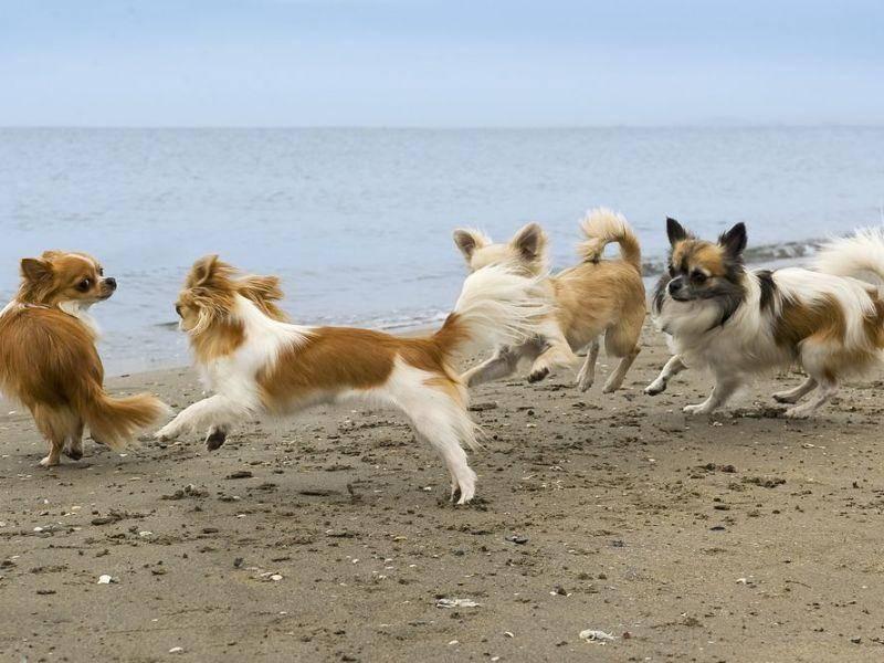 Hunde toben in der Gruppe: Ein toller Urlaub