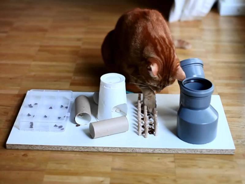 Katze spiel am Fummelbrett. Hier ein schöner Eigenbau