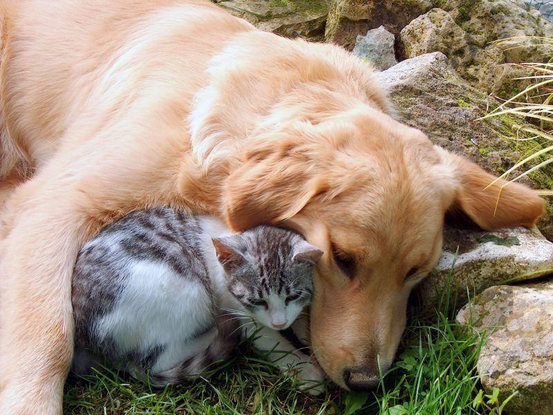 Na wenn das die anderen Hunde sehen: Kuscheln mit Nachbars Katze im Garten