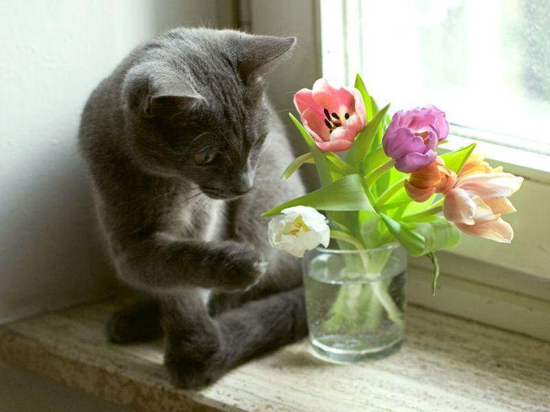 """""""Wie komm ich denn da jetzt ran?"""" - Katze mit Blumenvase"""