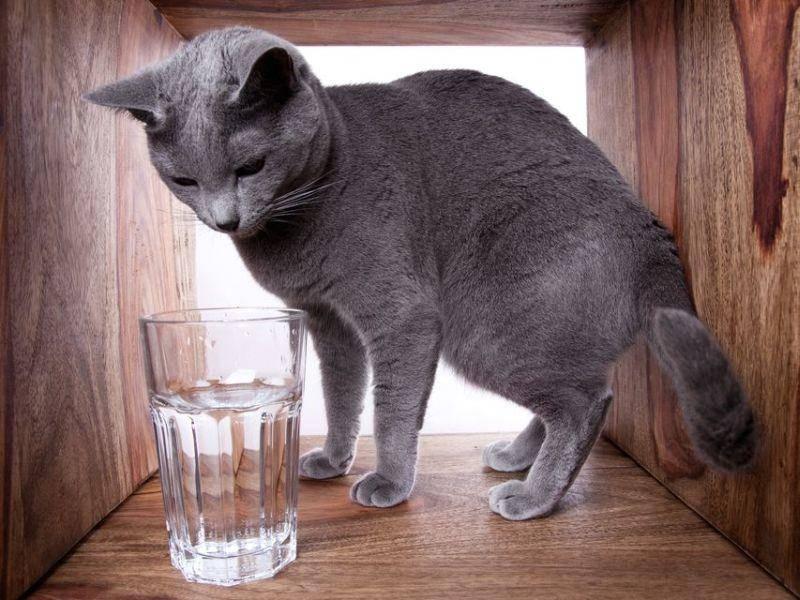 Faszination Wasser: Diese Katze entdeckt sie gerade für sich