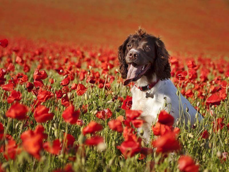 Schönes Frühlingsbild und eine Menge Platz zum Rennen für Hunde — Bild: Shutterstock / photomim