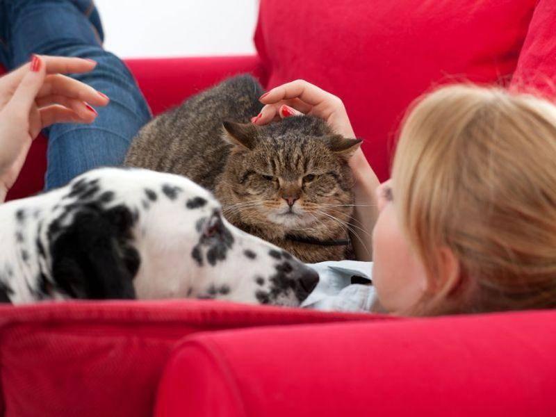 Kuscheln ohne Ende: Über dieses Valentinstagsgeschenk freuen sich Hunde und Katzen