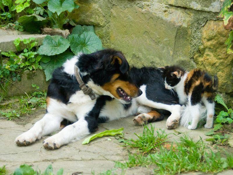 Freundschaft zwischen Hund und Katze: Zu zweit ist es im Garten doch gleich viel schöner