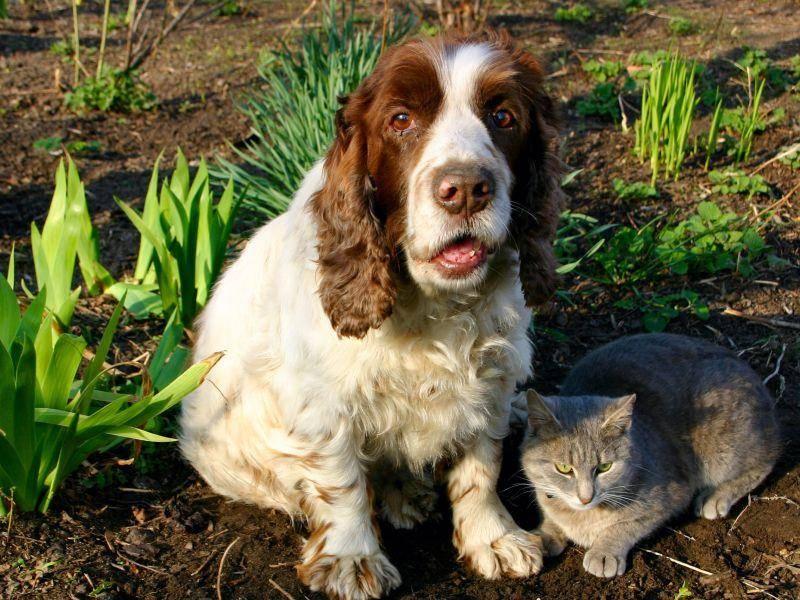 Hund und Katze im Garten: Wer hat das Loch gebuddelt?