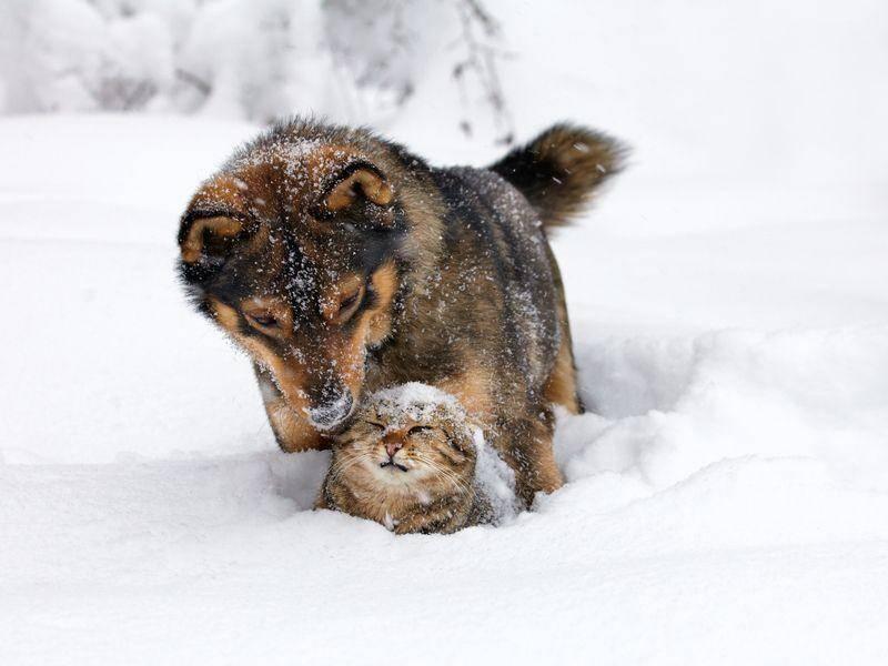 Und was Hund noch so alles im Schnee anstellen kann - zum Beispiel, Nachbars Katze ärgern