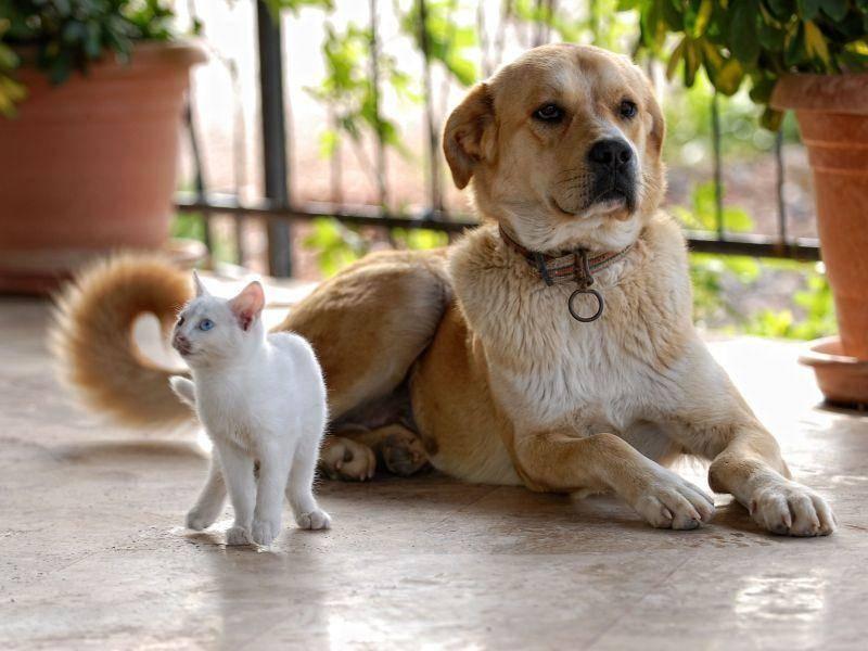 Katze und Hund im selben Haushalt: Meistens gar kein Problem