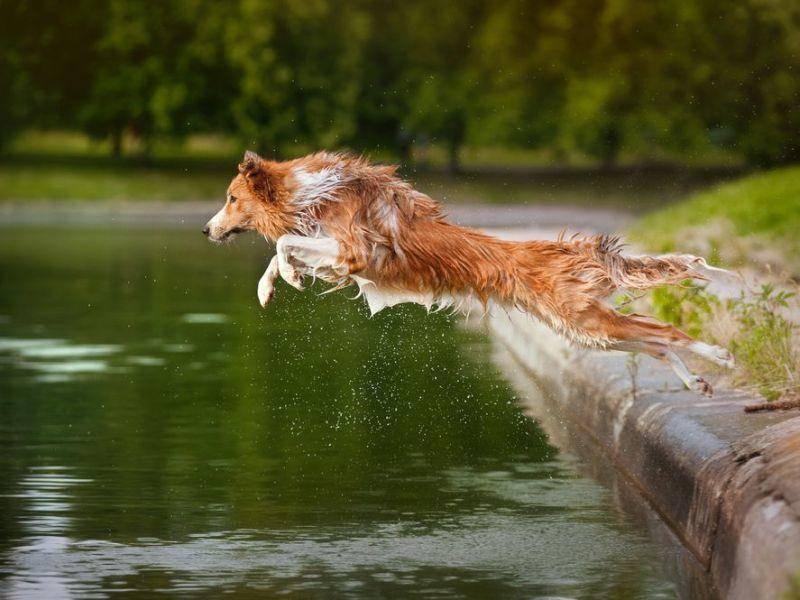 Springender Hund: Endlich Urlaub? Dann rein ins Vergnügen!