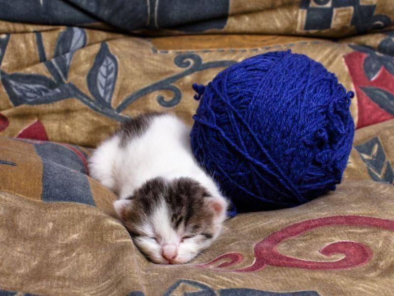 Im Schatten des Wollknäuels: Katzenbabys sehen einfach auf jedem Schlafplatz niedlich aus