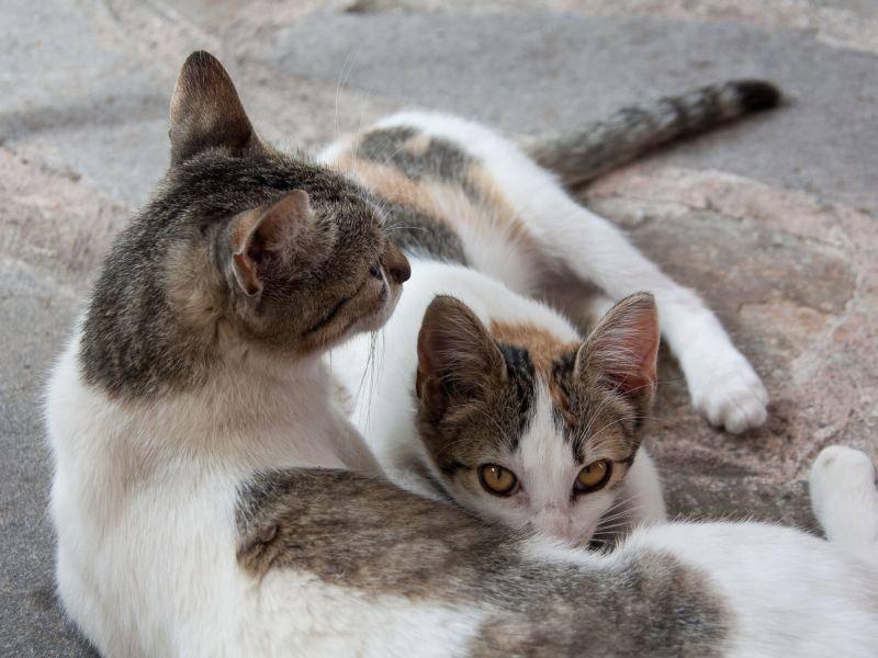 Wer ist wer? Bunte Katze mit Kitten — Bild: Shutterstock / Javier Rosano