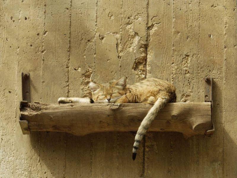 Suchbild: Finde die Katze auf ihrem Schlafplatz
