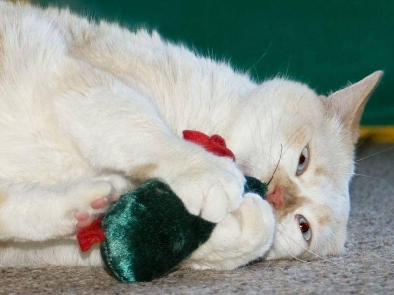 Catnip-Spielzeug: Der neueste Trend unter den beliebtesten Katzenspielzeugen
