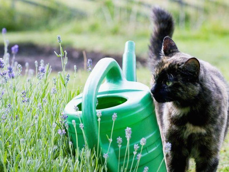 Katze inspiziert Gießkanne: Mal sehen, ob da was drinnen ist!