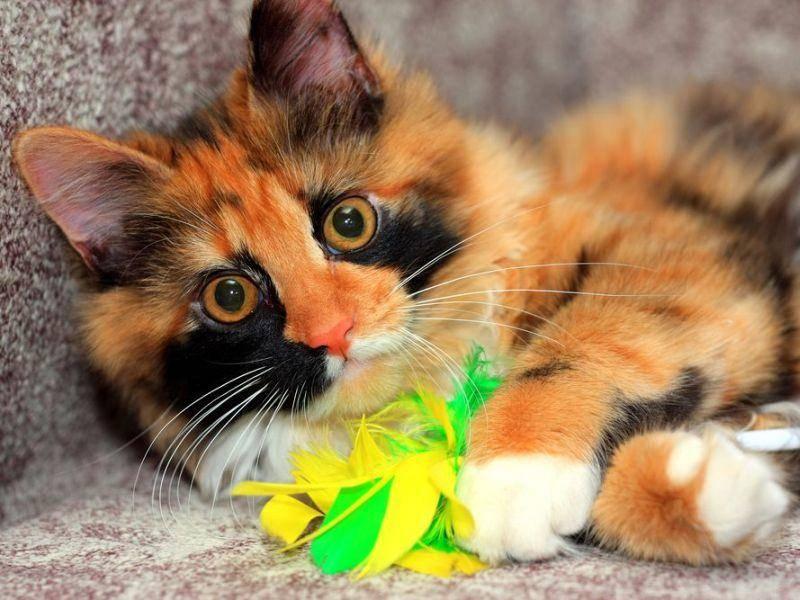 Ein neues Lieblingsspielzeug als Valentinstagsgeschenk für Hund und Katze