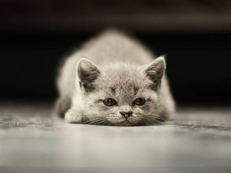"""Platz 1: In Deutschland ist """"Leo"""" ist der beliebteste Katzenname für Kater – Bild: Shutterstock / Belovodchenko Anton"""