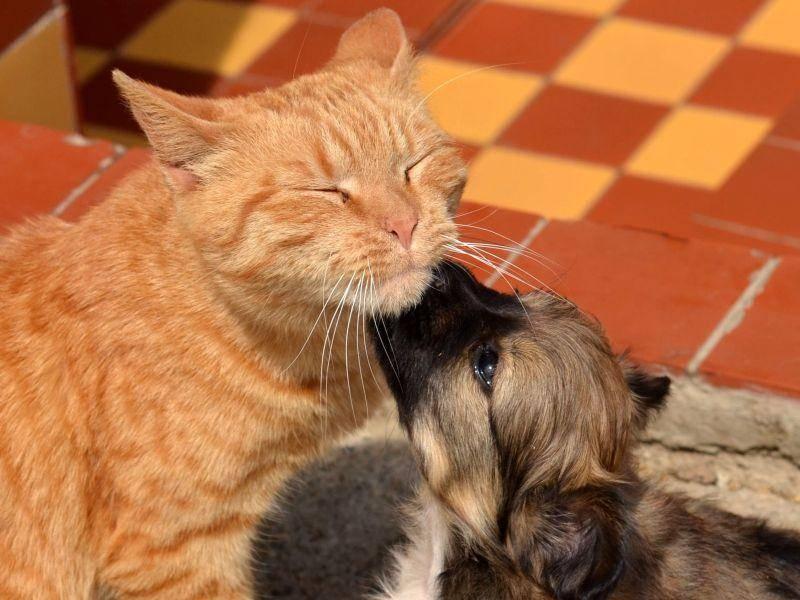 Hundebaby mit Katze: Huch, ist die groß!