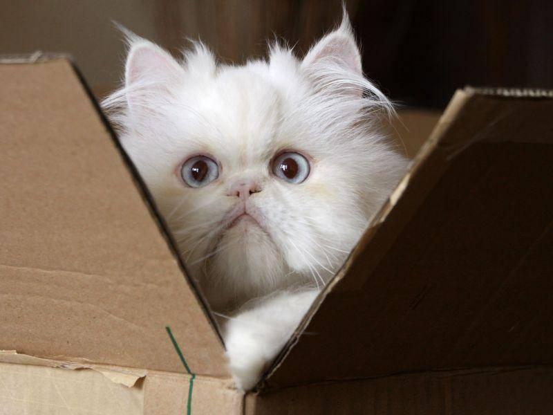 Kartons: Ein einfaches, aber effektives Spielzeug für Katzen